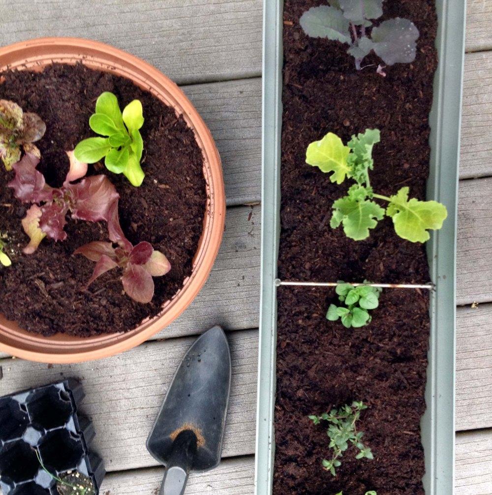 plants-beginning